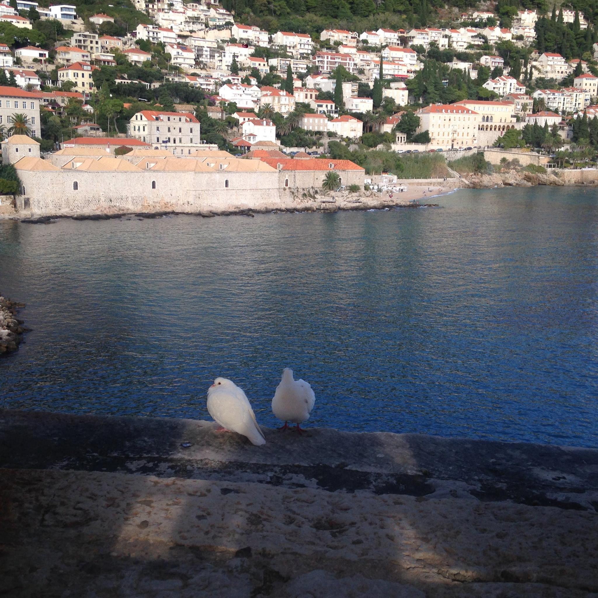 Dva goluba. Foto: Mirjana Vasiljević