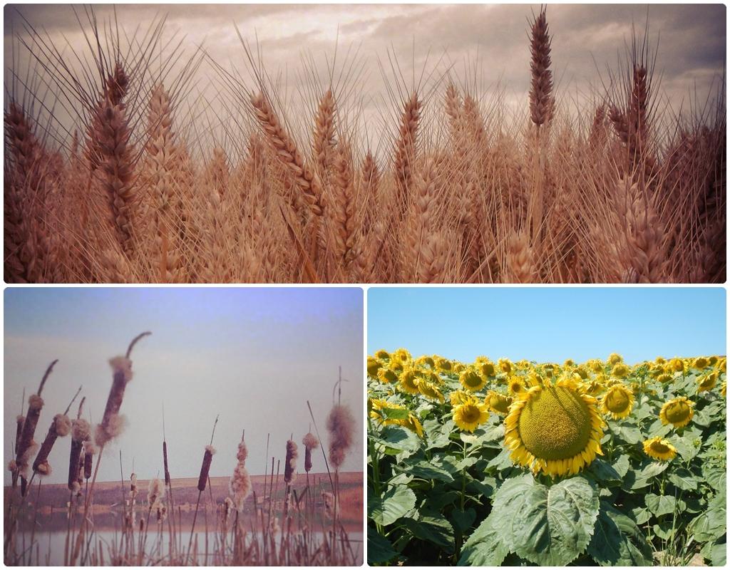 Bogastvo flore. Foto: Mirjana Vasiljević