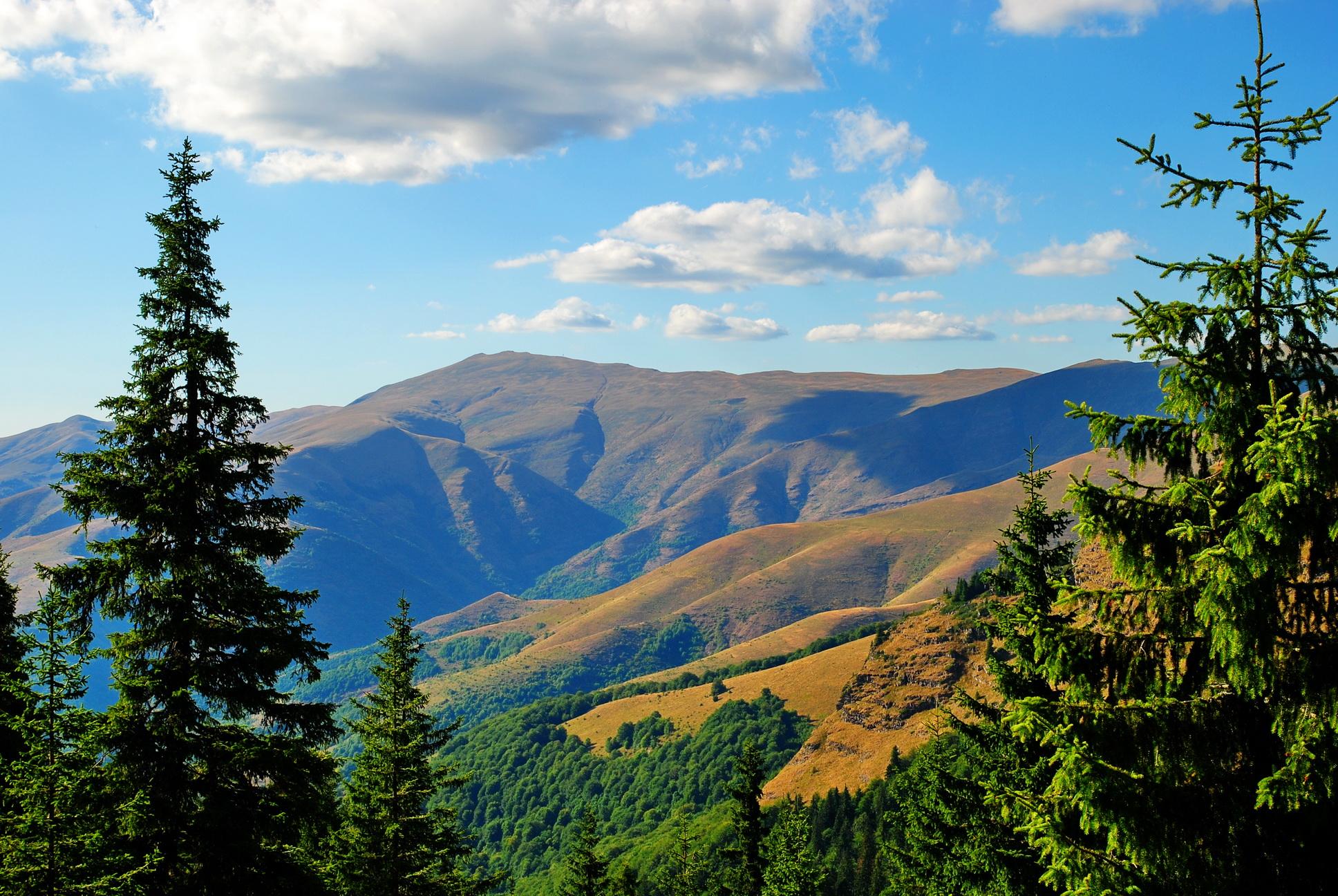 """Pirot, 7. jula 2013. - Staroplaninski pejzaž. Pirocanac Zoran Kostadinovic jedan je od poslednjih """"rancera"""" na Staroj planini, koji od pocetka maja pa do novembra cuva nekoliko desetina krava na pašnjacima zvanim Belede, na nadmorskojvisini iznad 1.500 metara.Ovaj savremeni """"kauboj"""" i cobanin kaže da priroda jeste lepa, ali naglašava da je i izuzetno surova. FOTO TANJUG / ALEKSANDAR CIRIC / nr"""