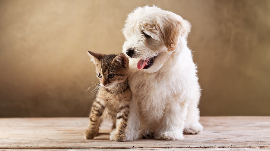 Pets and Friends